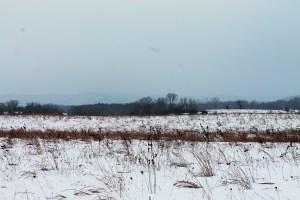 Winter Dunes 080