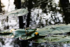 canoe-trip-044