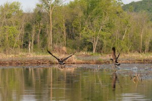 canoe-trip-274