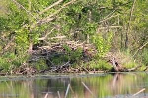 canoe-trip-335